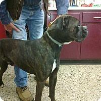 Adopt A Pet :: Boomer - Brentwood, TN