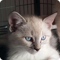 Adopt A Pet :: Selena - San Fernando Valley, CA
