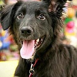 Photo 2 - Labrador Retriever/Golden Retriever Mix Dog for adoption in Fresno, California - Madison