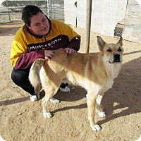 Adopt A Pet :: Kat - San Tan Valley, AZ