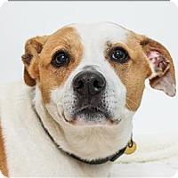 Adopt A Pet :: Lady - San Luis Obispo, CA
