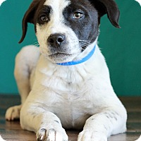 Adopt A Pet :: Speckles - Waldorf, MD
