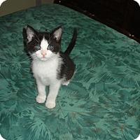 Adopt A Pet :: Jillie - Woodstock, ON