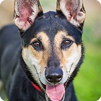 Adopt A Pet :: Ace - Evansville, IN