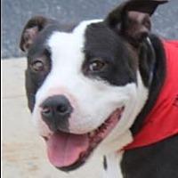 Adopt A Pet :: Lucky Mama - Staunton, VA