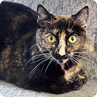 Adopt A Pet :: Kate Spade - Sarasota, FL