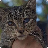 Adopt A Pet :: Zora - Brooklyn, NY