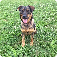 German Shepherd Dog Mix Dog for adoption in Coldwater, Michigan - Carly - GRADUATE