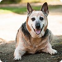 Adopt A Pet :: ROMAN - Coudersport, PA
