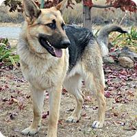 Adopt A Pet :: Brisco - Yreka, CA