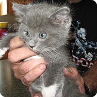 Adopt A Pet :: Sammie - Fallon, NV