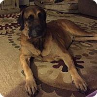 Adopt A Pet :: Otis - Burnham, PA