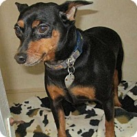 Adopt A Pet :: Chancey - Clear Lake, IA