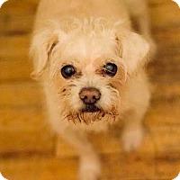 Adopt A Pet :: Flash - New York, NY
