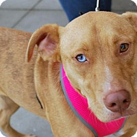 Adopt A Pet :: Sky Ellie - Madison, AL