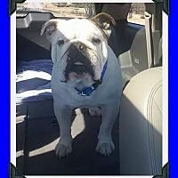 Adopt A Pet :: Damon - Hurst, TX