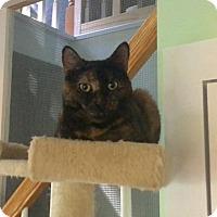 Adopt A Pet :: Amelia - Calverton, NY