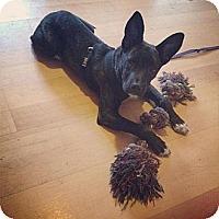 Adopt A Pet :: Nora - Saskatoon, SK