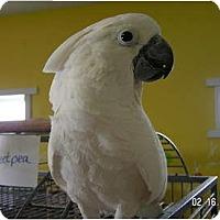 Adopt A Pet :: Sweet Pea - Edgerton, WI