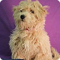 Adopt A Pet :: Noah - Broomfield, CO
