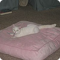 Adopt A Pet :: Emerald - Xenia, OH