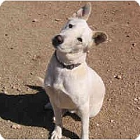 Adopt A Pet :: Buddy - courtesy Post - Scottsdale, AZ