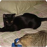 Adopt A Pet :: Perry - Chesapeake, VA