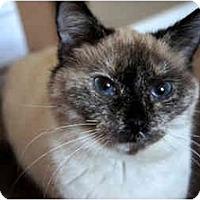 Adopt A Pet :: Matilda - Xenia, OH