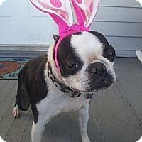 Adopt A Pet :: Susie - Cumberland, MD