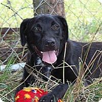 Adopt A Pet :: DJ - Hagerstown, MD