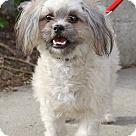 Adopt A Pet :: Capote