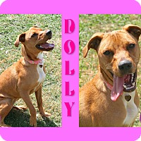 Adopt A Pet :: Dolly - Tampa, FL