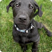 Adopt A Pet :: Wilson - Drumbo, ON