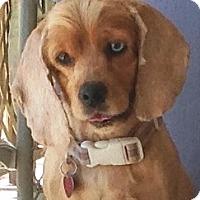 Adopt A Pet :: Chewy - Santa Barbara, CA