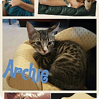 Adopt A Pet :: Archie - Arlington/Ft Worth, TX