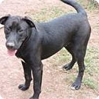 Labrador Retriever Dog for adoption in Cottonport, Louisiana - Michael