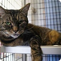 Adopt A Pet :: Milly - New Milford, CT