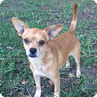 Adopt A Pet :: Emiliano Zapata - Sanford, FL