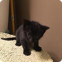 Adopt A Pet :: Salem or Binx - Jerseyville, IL