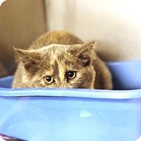 Adopt A Pet :: Minadera - BARN - Midland, MI