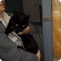 Adopt A Pet :: Ryder - THORNHILL, ON