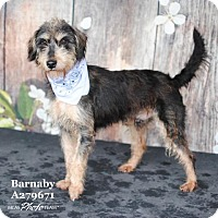 Adopt A Pet :: BARNABY - Conroe, TX