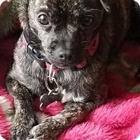 Adopt A Pet :: Bessie - Monrovia, CA