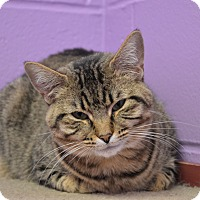 Adopt A Pet :: Casiopia - House Springs, MO