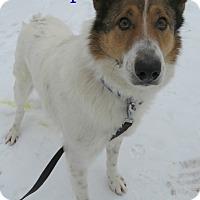 Adopt A Pet :: Tramp - Menomonie, WI