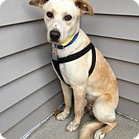 Adopt A Pet :: Dave - Fort Atkinson, WI