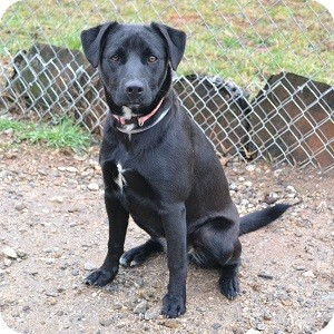 Cur Dog For Sale In Ga
