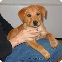 Adopt A Pet :: *Maple - PENDING - Westport, CT
