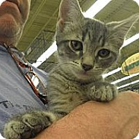 Adopt A Pet :: Mayham - Warren, MI