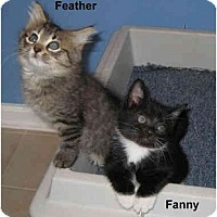 Adopt A Pet :: Fanny - Jacksonville, FL